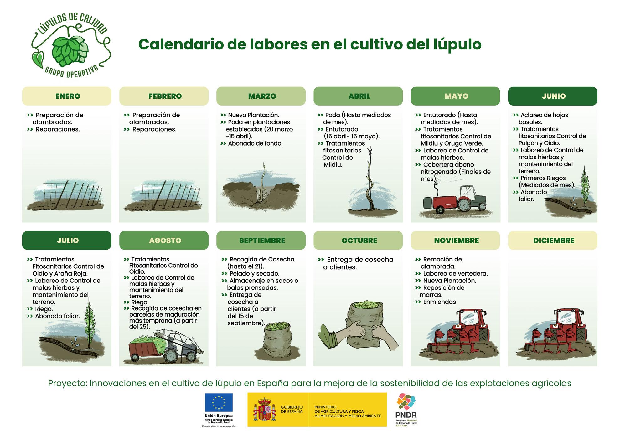 Calendario de labores en el cultivo del lúpulo