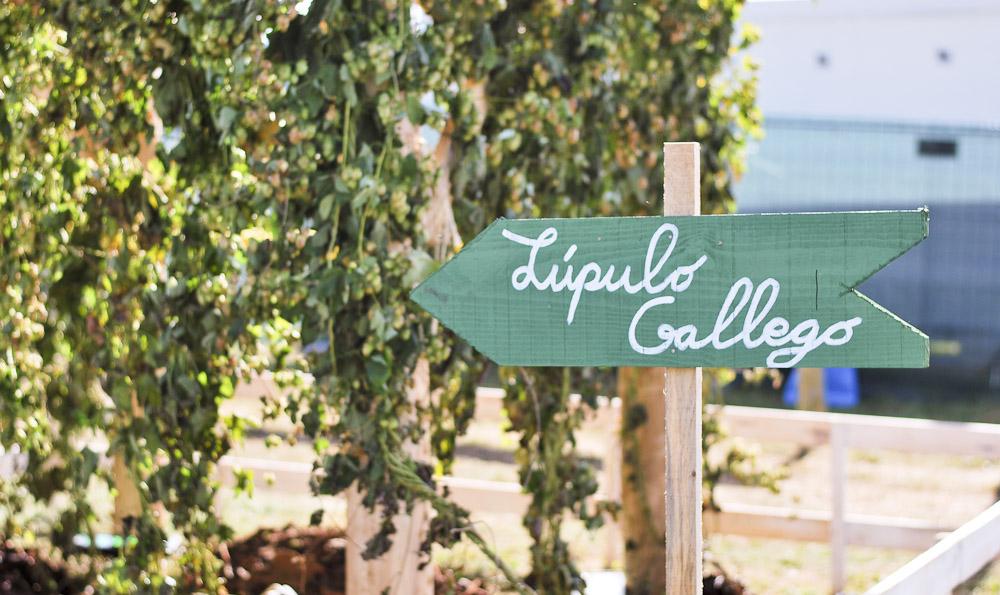 cultivo-lupulo-galicia-cartel